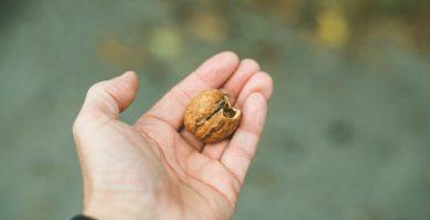 comer nueces al dia